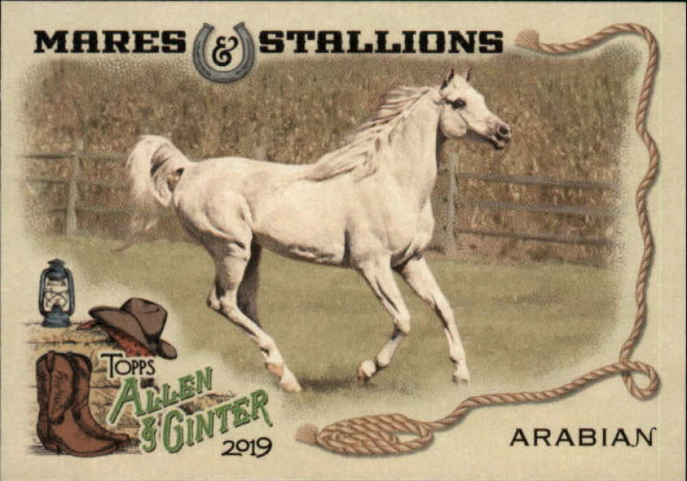 2019 Allen and Ginter  Mares and Stallions