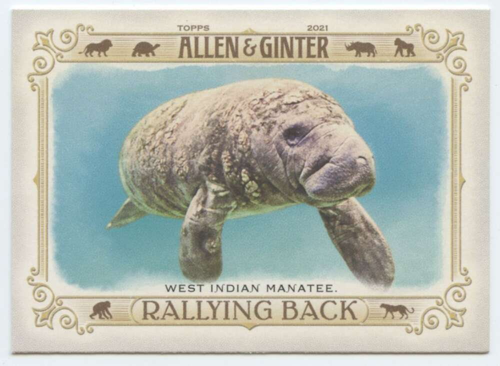 2021 Allen and Ginter  Rallying Back